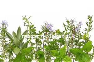 травы для похудения в домашних